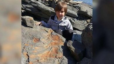 Photo of เด็กชาย 7 ขวบสะดุดซากไดโนเสาร์อายุ 250 ล้านปียืนยันโดยนักบรรพชีวินวิทยา |  การค้นหาครั้งใหญ่ของเด็ก 7 ขวบการอ้างสิทธิ์ของการค้นพบอายุ 25 ล้านปีคืออะไร