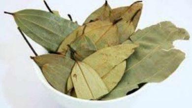 Photo of [Daily drinking bay leaf tea will make you beautiful and fit] | [केवल स्वाद ही नहीं बल्कि आपके फिटनेस और खूबसूरती का भी राज हो सकता है तेज पत्ता]