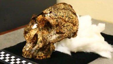 Photo of นักโบราณคดีพบกะโหลกศีรษะของญาติมนุษย์ที่ตายไปแล้วหลายล้านปี |  เมื่อหลายล้านปีก่อนพบกะโหลกศีรษะของญาติที่ตายแล้วรู้ว่าทำไมการค้นพบจึงเป็นสิ่งสำคัญ