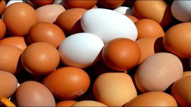 Photo of ผลการศึกษาเตือน: ไข่ 1 ฟองต่อวันเพิ่มความเสี่ยงต่อโรคเบาหวาน 60% |  นักวิจัยเตือน: การกินไข่ทุกวันอาจหนักอาจทำให้เกิดโรคได้