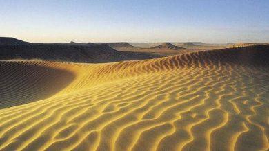 Photo of NASA พบต้นไม้ 180 โกรส์ในทะเลทรายซาฮาราและจะช่วยอนุรักษ์สิ่งแวดล้อมได้อย่างไร  NASA พบต้นไม้ 180 ล้านต้นในทะเลทรายซาฮาร่าจะช่วยในการรักษาสิ่งแวดล้อม