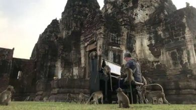 Photo of ดนตรีโดย Paul Barton ให้เข้ากับลิงป่าปล่อยให้กังวลเรื่องความหิวและเริ่มฟังเพลง