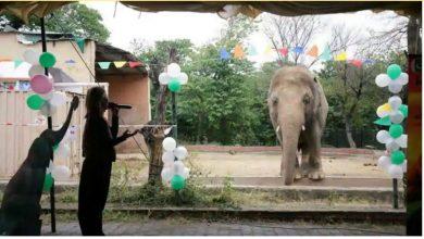 Photo of ช้างที่โดดเดี่ยวที่สุดของปากีสถาน Kaavan ทิ้งให้อินโดนีเซีย