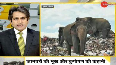 Photo of การวิเคราะห์ดีเอ็นเอช้างตายจากการกินเศษซากจากการฝังกลบในศรีลังกา |  ทำไมช้างถึงอดอยากในศรีลังกา?