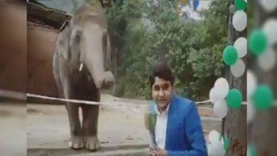 Photo of ช้าง Kaavan เล่นตลกกับนักข่าวปากีสถาน Video Goes Viral