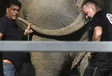 Photo of ความคิดริเริ่มของป๊อปสตาร์ Cher ประสบความสำเร็จ Kaavan ช้างที่โดดเดี่ยวที่สุดในโลกมีสหาย |  ในที่สุดป๊อปสตาร์ก็ได้รับการริเริ่มของ Cher 'Kaavan' กำจัดความสันโดษ '