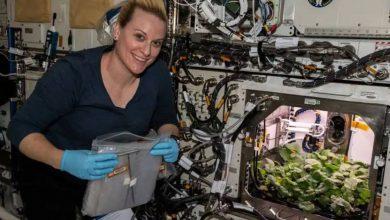Photo of NASA แชร์วิดีโอการปลูกหัวไชเท้าเป็นครั้งแรกบนสถานีอวกาศนานาชาติ  NASA แชร์วิดีโอการเพาะปลูกหัวไชเท้าเป็นครั้งแรกที่สถานีอวกาศนานาชาติ