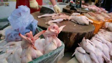 Photo of ไข้หวัดนกระบาดหนักในญี่ปุ่นไก่กว่า 2 ล้านตัว |  การระบาดของโรคไข้หวัดนกในประเทศหลังโคโรนาไก่กว่า 2 ล้านตัวถูกฆ่า