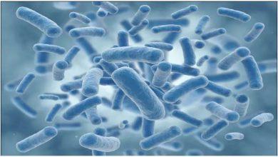 Photo of แบคทีเรียและไวรัสสามารถเข้าถึงจากทวีปหนึ่งไปยังอีกทวีปหนึ่งผ่านอนุภาคฝุ่นกล่าวว่าการศึกษา |  การวิจัยบรรยากาศ: ด้วยวิธีนี้โรคระบาดสามารถแพร่กระจายไปทั่วทวีปได้