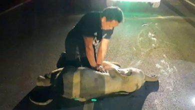 Photo of ลูกช้างบาดเจ็บจากอุบัติเหตุทางถนนคนช่วยชีวิต  ข่าวภาษาฮินดีโลก