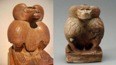 Photo of สมบัติอียิปต์พบได้จากกะโหลกของลิงบาบูนอายุ 3300 ปี |  สมบัติของอียิปต์สามารถพบได้จากกะโหลกของลิงบาบูนอายุ 3300 ปีรู้ความลับ