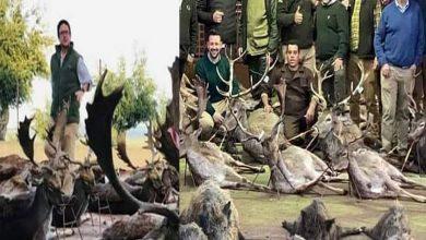 Photo of สัตว์ป่า 540 ตัวรวมถึงกวางที่ถูกนักล่าชาวสเปนฆ่าในโปรตุเกส |  โปรตุเกส: สัตว์ 540 ตัวถูกนักล่าฆ่าในสเปนผู้คนต่างพากันลุกเป็นไฟ