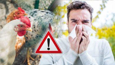 Photo of ไข้หวัดนกเป็นอันตรายถึงชีวิตสำหรับมนุษย์โดยจะแสดงอาการเหล่านี้เมื่อติดเชื้อ |  โรคไข้หวัดนกซึ่งเป็นอันตรายถึงชีวิตสำหรับมนุษย์จะแสดงอาการเหล่านี้เมื่อได้รับเชื้อ
