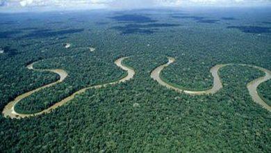 Photo of การศึกษาใหม่กล่าวว่าป่าฝนอเมซอนอาจหายไปภายในปี 2064 เนื่องจากการตัดไม้ทำลายป่า |  Amazon Rainforest: การวิจัยเปิดเผยป่าที่ใหญ่ที่สุดในโลกอาจสิ้นสุดลงในปี 2564