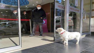 Photo of สุนัขใช้เวลาหลายวันนอกโรงพยาบาลเพื่อรอเจ้าของที่อิสตันบูลไก่งวงรักสัตว์เลี้ยง |  ตุรกี: สุนัขนั่งนอกโรงพยาบาลเป็นเวลา 7 วันเพื่อพบกับนายหญิงที่ป่วย