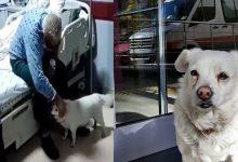 Photo of โบนบุ๊คสุนัขผู้ภักดีรอเจ้าของโรงพยาบาลนอกโรงพยาบาล 6 วันซึ่งได้รับบาดเจ็บเข้าโรงพยาบาล |  วิดีโอ: เจ้าของเข้ารับการรักษาในโรงพยาบาลสุนัขที่เลี้ยงไว้เฝ้าข้างนอกเป็นเวลา 6 วัน