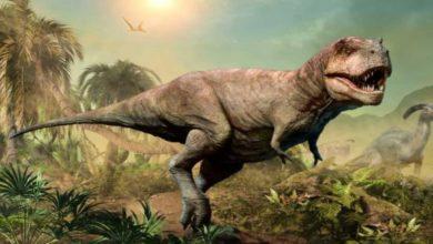 Photo of ข่าววิทยาศาสตร์ล่าสุดไดโนเสาร์ไปถึงดวงจันทร์ก่อนที่มนุษย์จะรู้ว่ามันเกิดขึ้นได้อย่างไร |  Dinosaur On Moon: ไดโนเสาร์มาถึงดวงจันทร์ก่อนมนุษย์รู้ว่ามันเกิดขึ้นได้อย่างไร