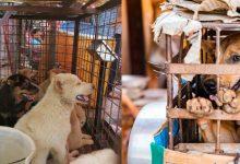 Photo of เลดี้เลดี้เลดี้เลดี้ฟีดฟีดฟีดอาหารสุนัขสุนัขสุนัขสุนัขสุนัขเนื้อสุนัขให้ลูก ๆ บ้านรกสุด ๆ |  ยูเครน: หญิงเคยให้อาหารสุนัขกับเด็กตำรวจประหลาดใจเมื่อเห็นสถานการณ์