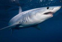 Photo of ปลาฉลามปลากระเบนสูญพันธุ์จากทะเลเนื่องจากการประมงคุกคามสิ่งแวดล้อมมากเกินไป    หลังจากโลกตอนนี้สิ่งมีชีวิตกำลังสูญพันธุ์ไปจากทะเลซึ่งเป็นภัยคุกคามต่อสิ่งแวดล้อม