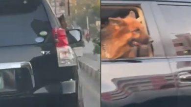 Photo of สุนัข Sindh Governors ขี่รถอย่างเป็นทางการพร้อมตำรวจคุ้มกันวิดีโอแพร่ระบาด |  เงินของประชาชนในปากีสถานไม่ดี VVIP เดินเตร่ในการรักษาความปลอดภัย