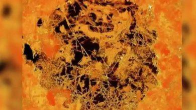 Photo of เชื้อรามฤตยูอาจทำให้เกิดโรคระบาดร้ายแรงกว่า COVID-19 |  นักวิทยาศาสตร์กลัวเชื้อราที่เป็นอันตรายมากกว่าโคโรนาอาจทำให้เกิดความหายนะมากขึ้น