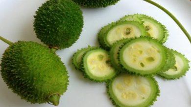 Photo of ข่าวสุขภาพ Kantola Vegetables มีประโยชน์อย่างมากต่อสุขภาพของผู้ชายรู้ประโยชน์ที่น่าอัศจรรย์ brmp |  Helth news: ผู้ชายควรตีสนิทกับผักที่ทรงพลังนี้คุณจะได้รับประโยชน์มากมาย