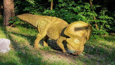 Photo of ไดโนเสาร์เพศแกะขนาดไดโนเสาร์ดึงดูดคู่หูที่มีคอขนาดใหญ่ |  Dinosaur Neck Frill: ไดโนเสาร์รูปแกะใช้เพื่อดึงดูดคู่ของเธอให้มีเซ็กส์ด้วย Frill คอพิเศษ