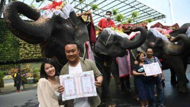 Photo of วันวาเลนไทน์: พิธีแต่งงานหมู่ประจำปีของไทยเป็นเรื่องที่น่าอัศจรรย์พิธีกรรมนี้มีการหารือ