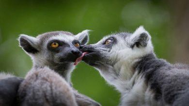 Photo of สัตว์จำพวกพังพอนวิทยาศาสตร์เพื่อชีวิตไม่เพียง แต่มนุษย์เท่านั้น แต่ยังรวมถึงสิ่งมีชีวิตอื่น ๆ ความรักความผูกพันอันยาวนานใช้ชีวิตร่วมกับคู่หู |  วิทยาศาสตร์ชีวภาพ: 'มนุษย์ไม่เพียง แต่อาศัยอยู่ในสิ่งมีชีวิตอื่น' สายสัมพันธ์รักอันยาวนาน แต่ใช้ชีวิตร่วมกับคู่ชีวิต