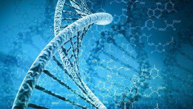 Photo of นักวิทยาศาสตร์ชาวอังกฤษพัฒนาเครื่องมือสำหรับจับการเคลื่อนไหวของดีเอ็นเอในเซลล์ |  สหราชอาณาจักร: นักวิทยาศาสตร์ประสบความสำเร็จครั้งใหญ่การถ่ายวิดีโอดีเอ็นเอภายในเซลล์