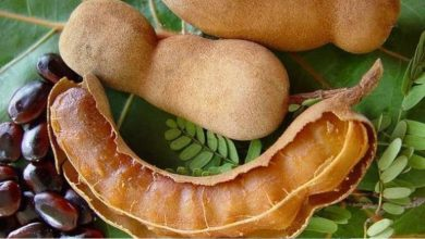 Photo of ข่าวสุขภาพประโยชน์ที่น่าทึ่งของการกินมะขาม PCup |  มะขามเปรี้ยวอมหวานคุมมันตั้งแต่ลดน้ำหนักยันเบาหวานรู้ประโยชน์ 6 อย่าง!