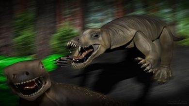 Photo of Anteosaurus: เครื่องจักรสังหารอายุ 260 ล้านปีเปิดเผยข่าววิทยาศาสตร์เป็นภาษาฮินดี |  Anteosaurus: นักวิทยาศาสตร์พบกับความสำเร็จครั้งยิ่งใหญ่!  ไดโนเสาร์ 'Killing Machine' ถูกระบุว่าสร้างความหายนะให้กับโลก