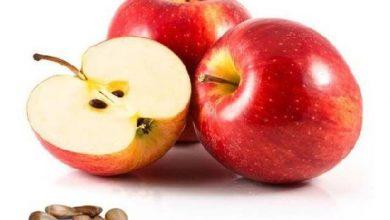 Photo of เมล็ดแอปเปิ้ลอาจเป็นพิษต่อร่างกายของคุณรู้ไหมว่ากาแฟมีประโยชน์อย่างไร ngmp |  คุณกินแอปเปิ้ลพร้อมกับเมล็ดของมันหรือไม่?  คุณจะต้องตกใจเมื่อรู้ว่ามันสูญเสีย