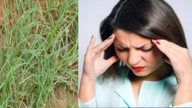 Photo of เคล็ดลับสุขภาพหญ้าเบอร์มิวดาที่เติบโตข้างถนนสามารถรักษาไมเกรนได้รู้วิธีใช้ Durva grass pcup |  ในอาการปวดไมเกรนมีงานที่ต้องทำอีกมากในการบูชาหญ้าเรียนรู้วิธีใช้
