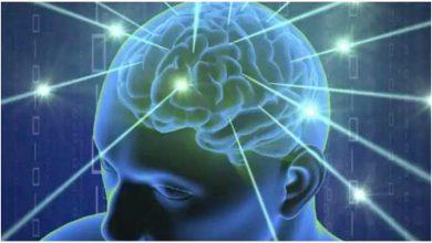 Photo of ศึกษาการเปลี่ยนโมเลกุลทำให้สมองของมนุษย์มีขนาดใหญ่ขึ้นเมื่อเทียบกับสมองลิง |  สมองของมนุษย์มีขนาดใหญ่กว่ากอริลลาและลิงชิมแปนซีขนาดเพิ่มขึ้นเนื่องจากสวิตช์โมเลกุล