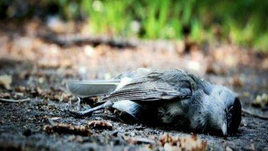 Photo of การฆ่าตัวตายของนก Assam การฆ่าตัวตายของนกใน Jatinga Valley ซึ่งตั้งอยู่ในหุบเขาในเขต Dima Hasao ของรัฐอัสสัมรู้ข้อเท็จจริงทางวิทยาศาสตร์  ความลึกลับของหุบเขาจาทิงกา: หุบเขาที่แปลกประหลาด!  ในกรณีที่นกฆ่าตัวตายแม้แต่นักวิทยาศาสตร์ก็ไม่สามารถไขปริศนาได้