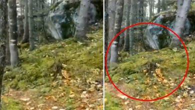 Photo of วิดีโอไวรัสวิดีโอหายใจในป่าแคนาดาป่าควิเบกเริ่มหายใจนักวิทยาศาสตร์บอกความจริงที่น่าตกใจ |  วิดีโอ Forest Breathing: ดูว่าป่าหายใจได้อย่างไรในวิดีโอ!  นักวิทยาศาสตร์บอกความจริงที่น่าตกใจ