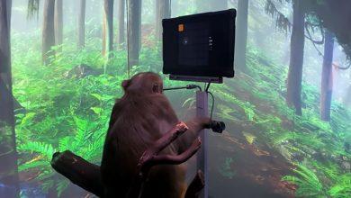 Photo of elon musks neuralink เผยให้เห็นลิงเล่นวิดีโอเกมบนคอมพิวเตอร์พร้อมกับข่าวไวรัล |  Elon Musk ใส่ชิปสมองเล่นวิดีโอเกมบนคอมพิวเตอร์ลิง  รู้วิธี