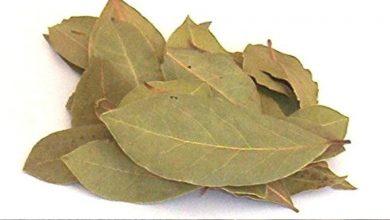 Photo of ประโยชน์ของการดื่มใบกระวาน tejpatta te ทุกวันช่วยให้ห่างไกลโรค |  ประโยชน์ของใบกระวาน: Tej patta ป้องกันโรคได้หลายอย่างมีประโยชน์มากมายในการดื่มชา