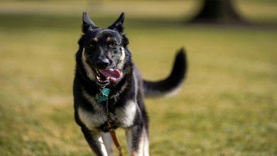 Photo of สุนัขถูกฝึกให้ดมกลิ่นโคโรนาไวรัสจากปัสสาวะของ Humans Science ข่าวล่าสุด |  การทดสอบ Covid: Doggy จะได้กลิ่นปัสสาวะและบอกคุณว่า Corona เป็นข้อเรียกร้องใหม่ในการศึกษาหรือไม่