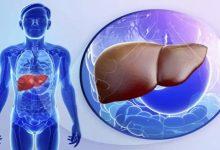 Photo of วันตับโลกอาหาร 5 หมู่เหล่านี้และยาปฏิชีวนะส่วนเกินอาจทำลายตับของคุณ |  วันตับโลก: การไม่ใส่ใจในอาหารและการใช้ยาปฏิชีวนะมากเกินไปอาจทำให้ตับของคุณเสียได้