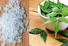 Photo of ประโยชน์ต่อสุขภาพของ mishri และสะเดา togather ประโยชน์ต่อสุขภาพของ mishri และสะเดาภูมิคุ้มกันทุกวันช่วยเพิ่มรสขมและหวาน  เริ่มเสริมสร้างระบบภูมิคุ้มกันด้วยการบริโภคขนมตาลกับสะเดาประโยชน์จะมากมายมหาศาล