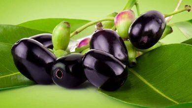 Photo of ประโยชน์ต่อสุขภาพของ Black Plum Jamun ke Fayde ในการลดน้ำหนักฟันเบาหวานฮีโมโกลบินความดันโลหิต ฯลฯ  Jamun ช่วยให้คุณมีสุขภาพที่ดีด้วยสุขภาพที่น่าอัศจรรย์จะกำจัดน้ำหนักส่วนเกิน