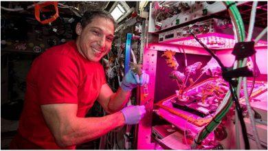 Photo of ชีวิตที่ดาวอังคารนักบินอวกาศเพลิดเพลินกับผักใบจีน pak choi at iss photo shared by nasa |  ตอนนี้ผักจะปลูกที่สถานีอวกาศใบปากชอยส่งให้นักบินอวกาศ