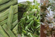 Photo of sehjan khane ke fayde ประโยชน์ต่อสุขภาพและสารอาหารของไม้ตีกลองลดน้ำหนักเพื่อเสริมสร้างภูมิคุ้มกัน  ใบไม้ตีกลองเปลือกไม้และดอกไม้ยังเป็นประโยชน์ที่น่าอัศจรรย์ของผักไม้ตีกลองที่เต็มไปด้วยวิตามิน