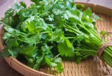 Photo of ประโยชน์ของผักชีเขียว janiye hari dhaniya patti ke fayde brmp |  ข่าวสุขภาพ: ผักชีเขียวช่วยแก้ปัญหาสายตาและอาการท้องผูกเรียนรู้ 5 ประโยชน์มหัศจรรย์