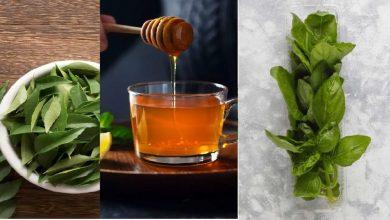 Photo of Tulsi Curry patta และน้ำผึ้งช่วยเพิ่มภูมิคุ้มกันของคุณ Tulsi หรือวางน้ำผึ้งช่วยในการเจริญเติบโตของภูมิคุ้มกันรู้ว่ารับที่นี่ pcup  ใช้ยาเพิ่มภูมิคุ้มกันแกงใบโหระพาน้ำผึ้งและใบโหระพาด้วยวิธีธรรมชาติ