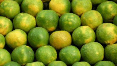 Photo of ประโยชน์ของการกระตุ้นภูมิคุ้มกัน Mausambi juice kese banaye Mausambi juice Mausambi juice ke fayde brmp |  เพิ่มภูมิคุ้มกัน Mausambi Juice: เตรียมที่บ้านเช่นนี้ในช่วงฤดูร้อนคุณจะได้รับประโยชน์ที่น่าอัศจรรย์หากบริโภคในเวลานี้!