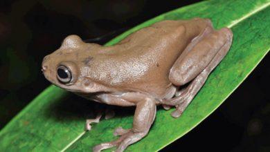 Photo of นักวิทยาศาสตร์ค้นพบ 'ช็อกโกแลตกบ' จากป่าจระเข้อันตราย รู้สาเหตุพิเศษ