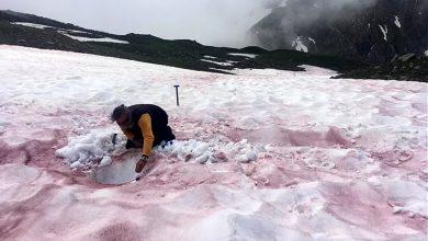 Photo of ทำไมธารน้ำแข็งถึงเปลี่ยนเป็นสีแดงในฝรั่งเศส นี่คือคำตอบ|  นักวิทยาศาสตร์มีส่วนร่วมในการแก้ทฤษฎี 'Glacier Blood' ในฝรั่งเศส เหตุผลที่น่าประหลาดใจบางอย่างถูกเปิดเผยในการสืบสวน
